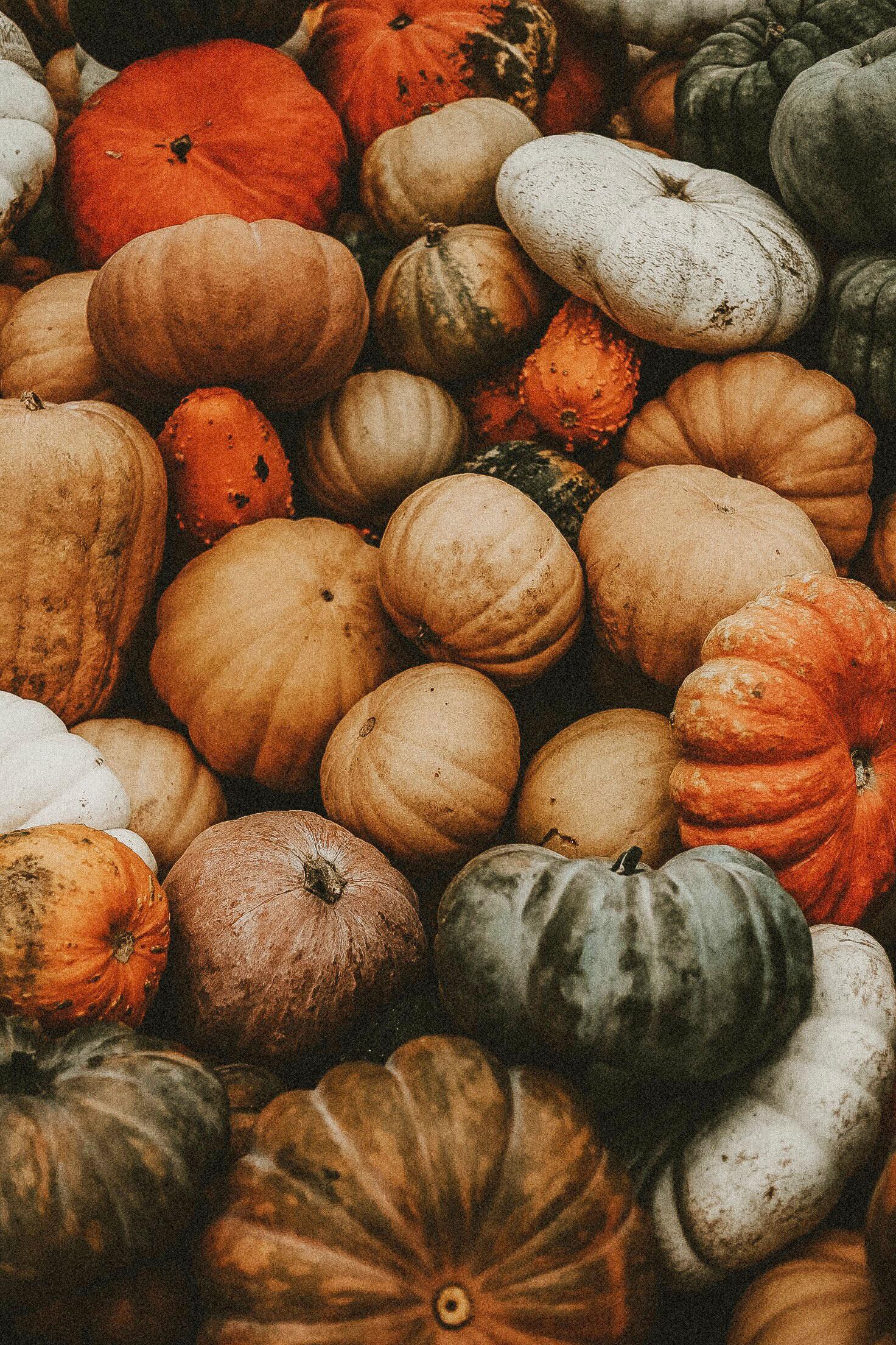 Recherche: Wer verwertet in der Schweiz Lebensmittelüberschüsse?